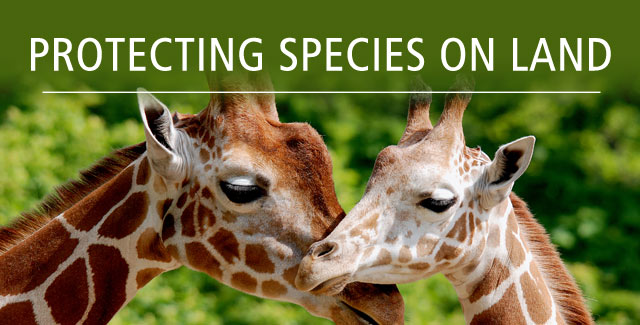 Protecting species on land